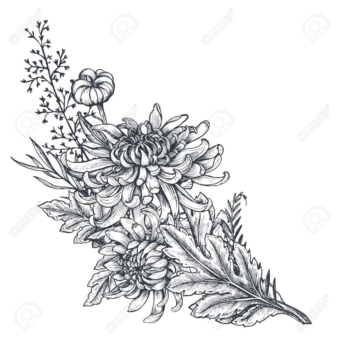 Vector Bouquet Of Hand Drawn Chrysanthemum Flowers In 2020 Chrysanthemum Flower Drawing Chrysanthemum Flower Chrysanthemum Flower Tattoo