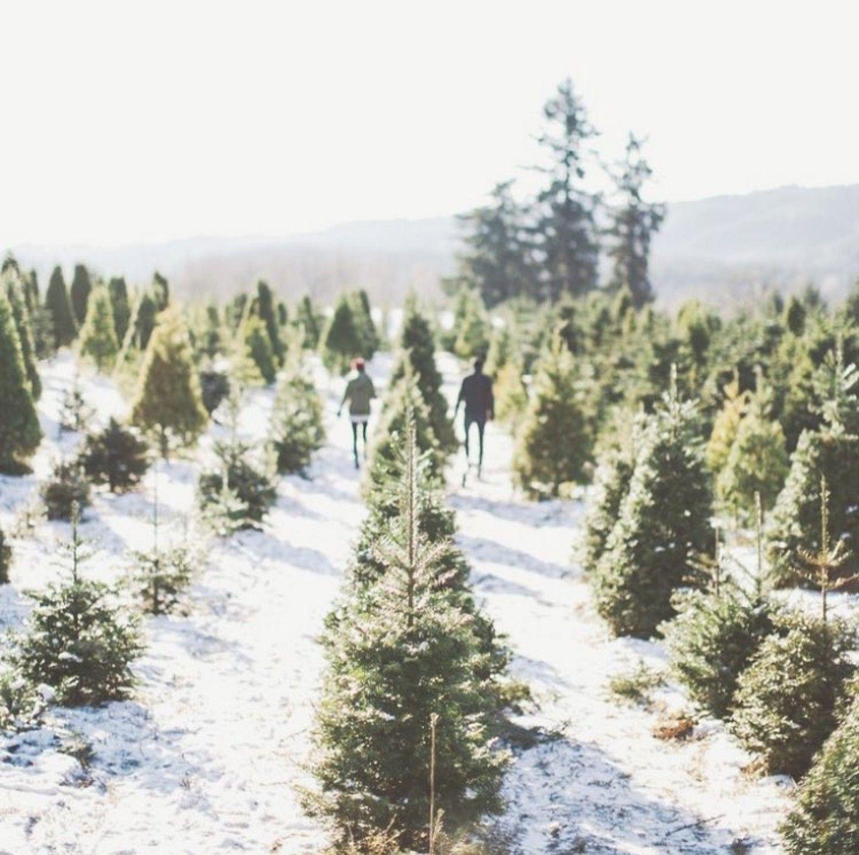 Christmas Tree Farm, Merry Christmas, Winter Green, Life Goals, Wonderful
