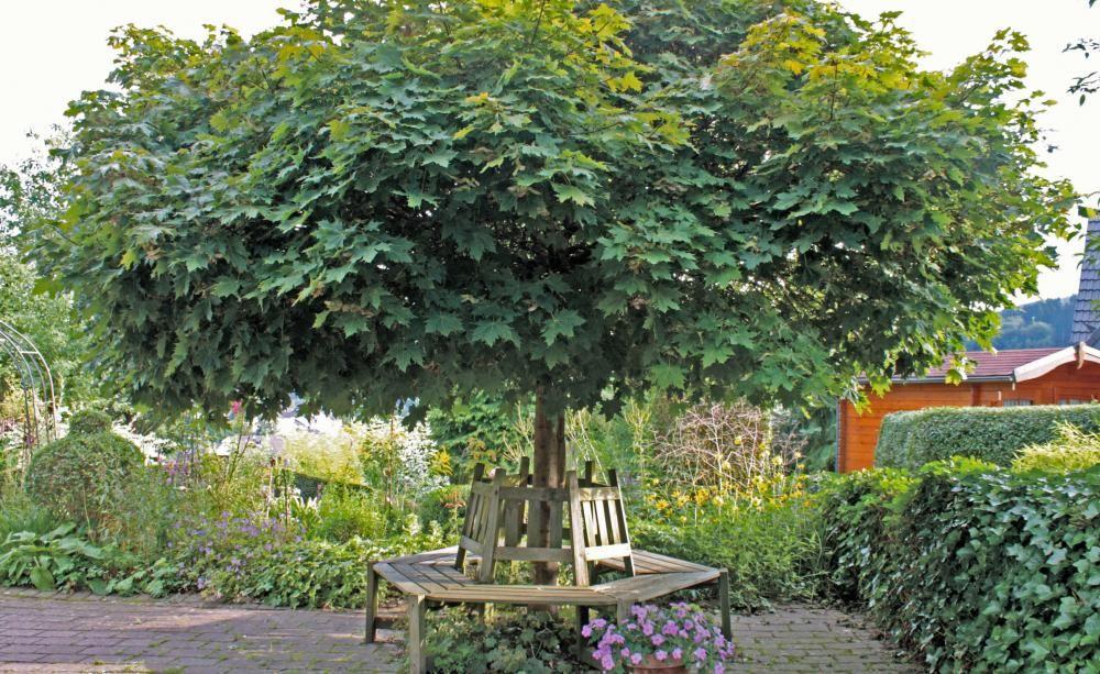 kugelb ume richtig schneiden gartentipps pinterest garten kugelbaum und kugel. Black Bedroom Furniture Sets. Home Design Ideas