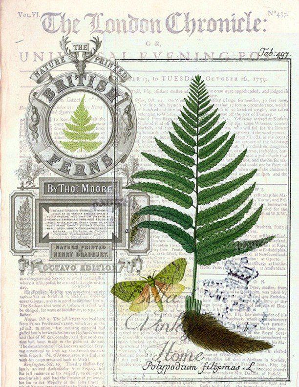 Botanical Fern 2 Print, Pillow, Note Cards, Tea Towel ...