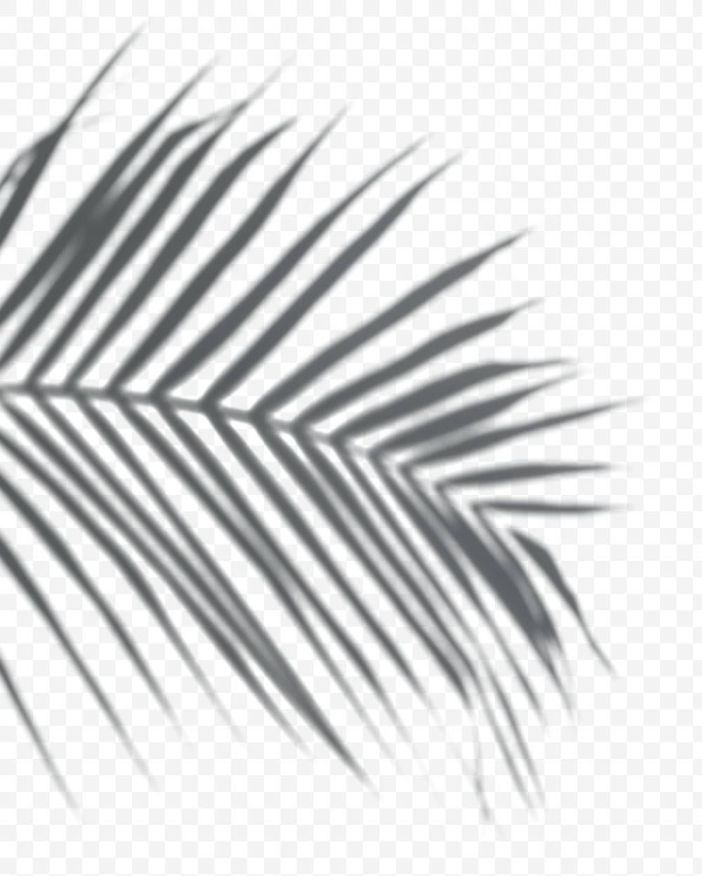 Download Free Png Of Shadow Of Palm Leaves Png On A Transparent Background About Shadow Palm Leaf Shadow Palm Shadow Leaf Background Transparent Background