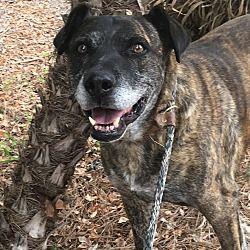San Diego Ca Mastiff Meet Pepe A 7 Yr Old Male Dog For Adoption