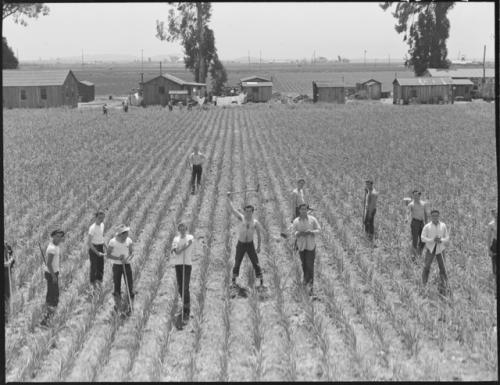 San Lorenzo California Evacuation Of Farmers Of Japanese