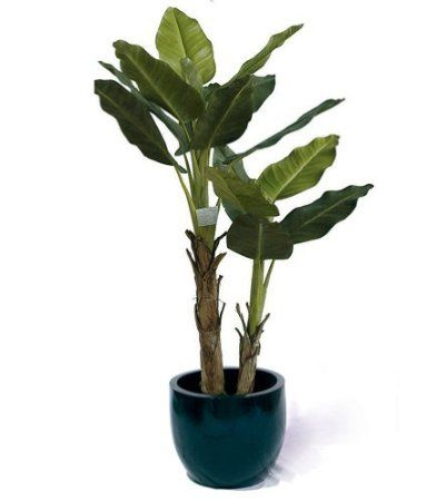 Equadorian Miniature Banana Plant, Artificial Plants, Artificial Trees, Fake  Tree, Fake Plants