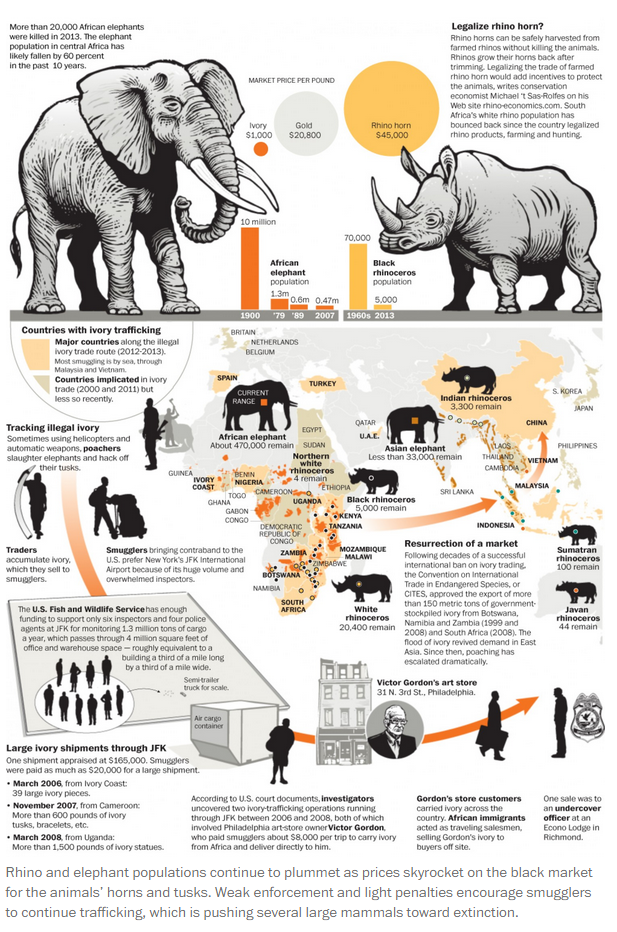 The Washington Post On Animal Infographic Elephant Facts