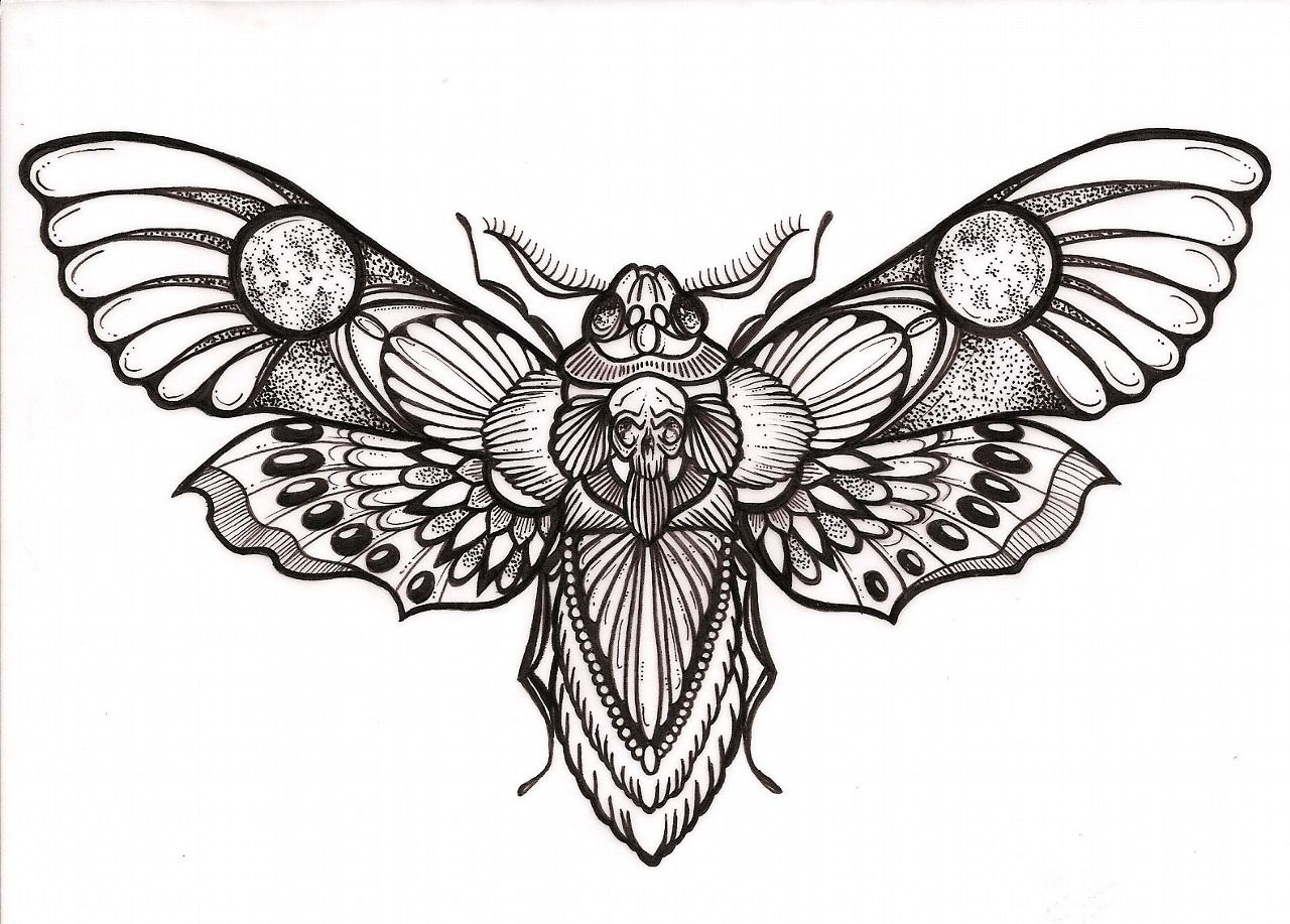 Awesome Deaths Head Hawk Moth Tattoo Design Moth Tattoo Design Moth Tattoo Death Moth Tattoo