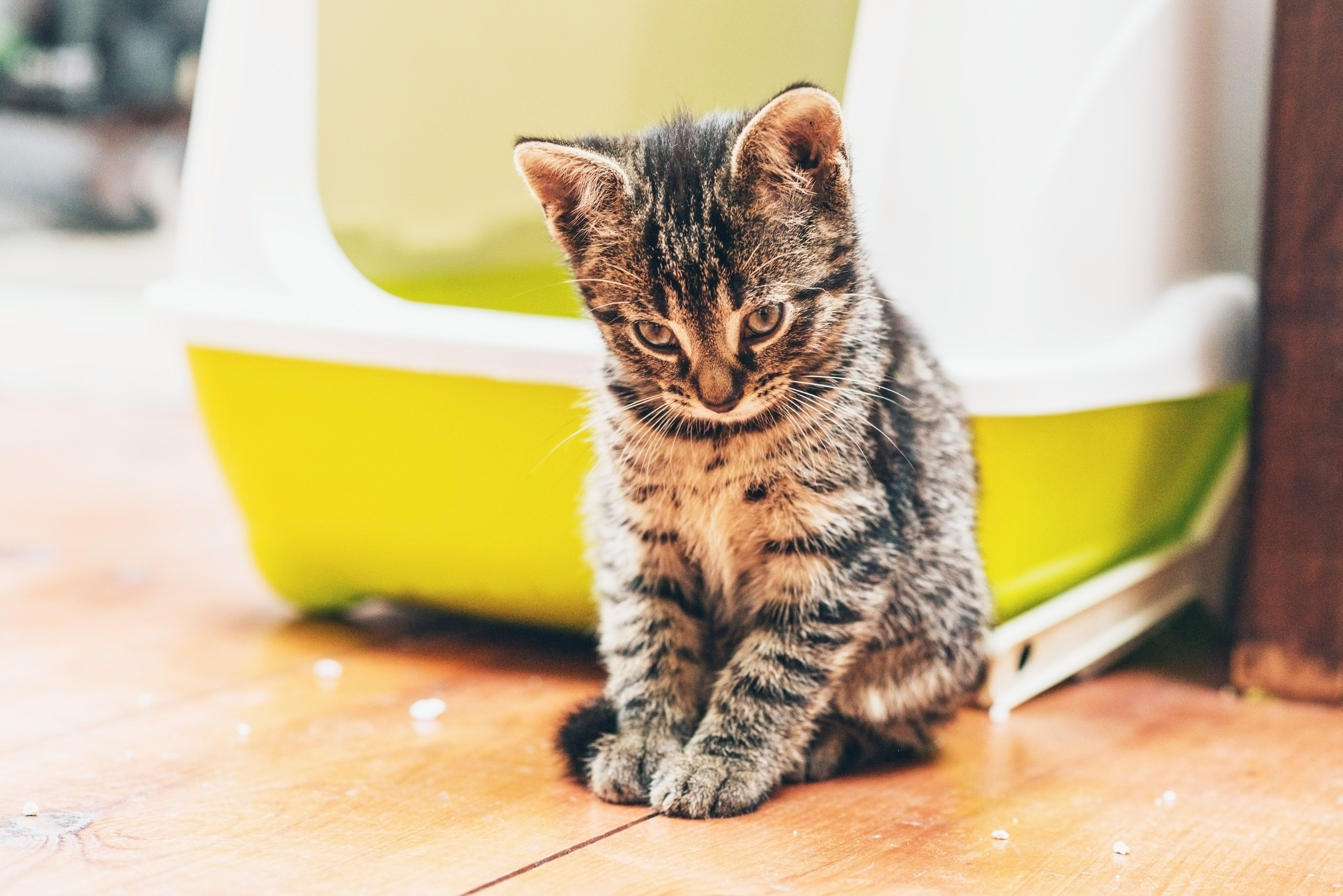 Why Your Cat is Peeing or Pooping Outside the Litter Box