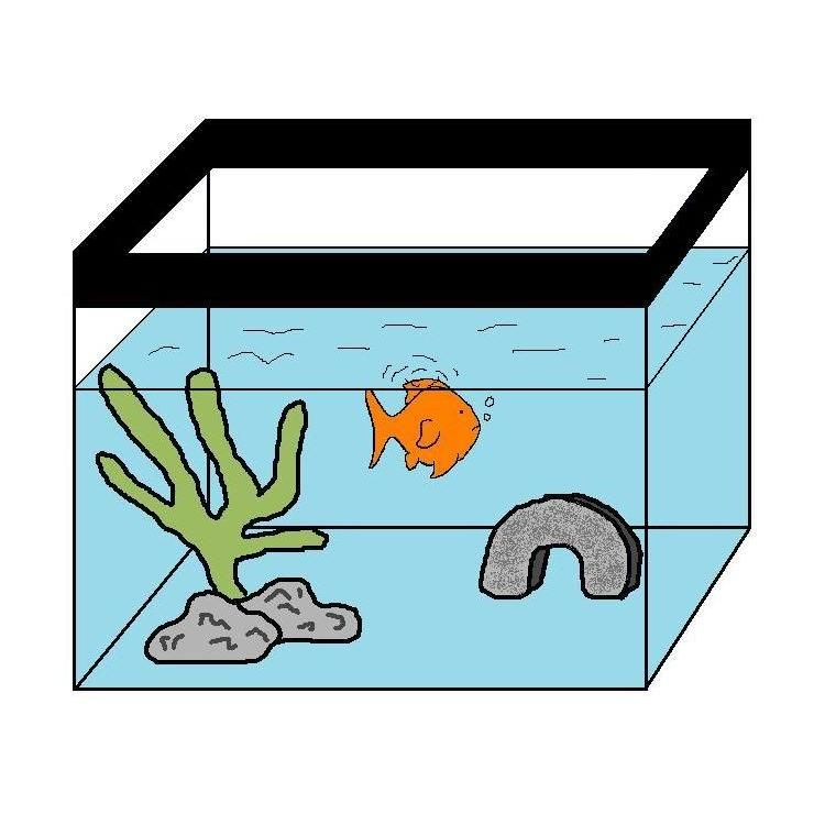 Changing goldfish water how to do a goldfish water change