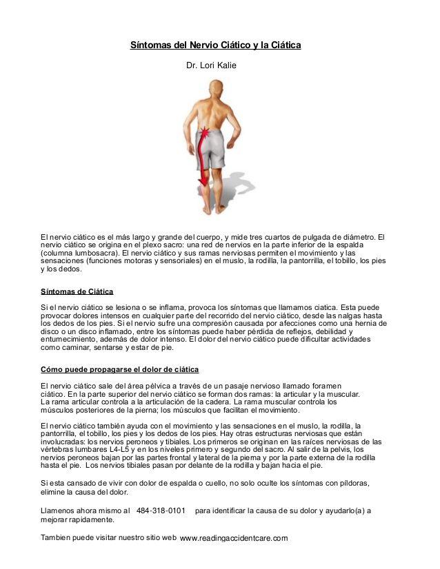 El nervio ciático es el más largo y grande del cuerpo, y mide tres ...
