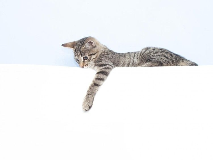 Researchers discover that female cats are more likely to