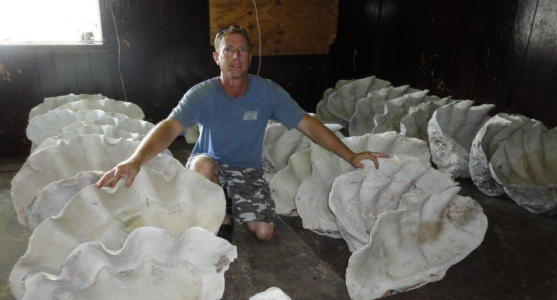 Giant Clam Shells Wow In 2019 Giant Clam Shell Clams