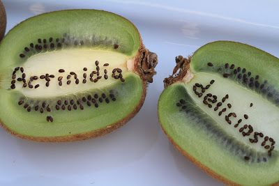 Kiwifruit Binomial Name Spelled With Seeds