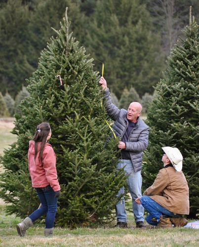 Pin On Ct Christmas Tree Farms