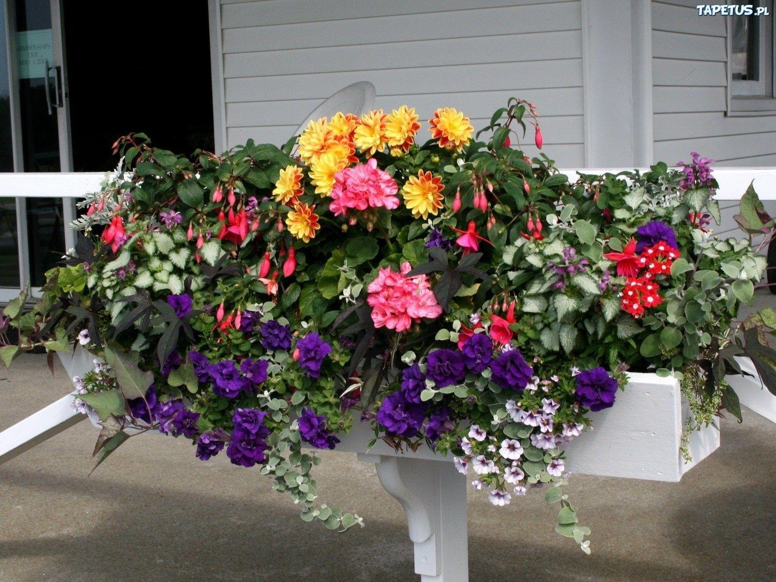 Kwiaty Balkonowe Kompozycja Tapety Flower Backround Flower Pots Petunias