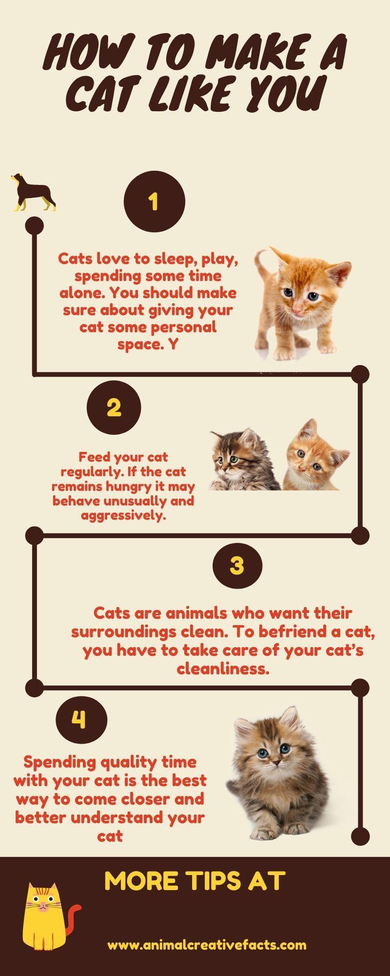6644e470de14c6be9242114fa4306266 - How Do You Get Your Cat To Like You