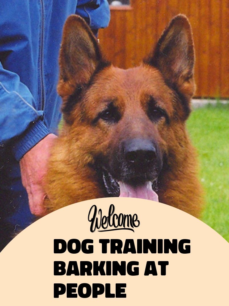Have A Dog Training Barking At People You Can T Miss This