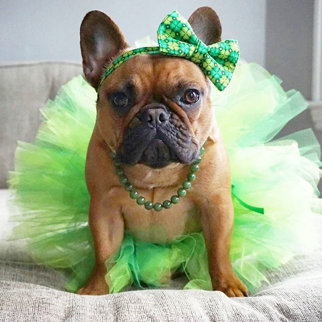 14 Dogs Who Prove Everyone Really Is Irish On St Patrick S Day