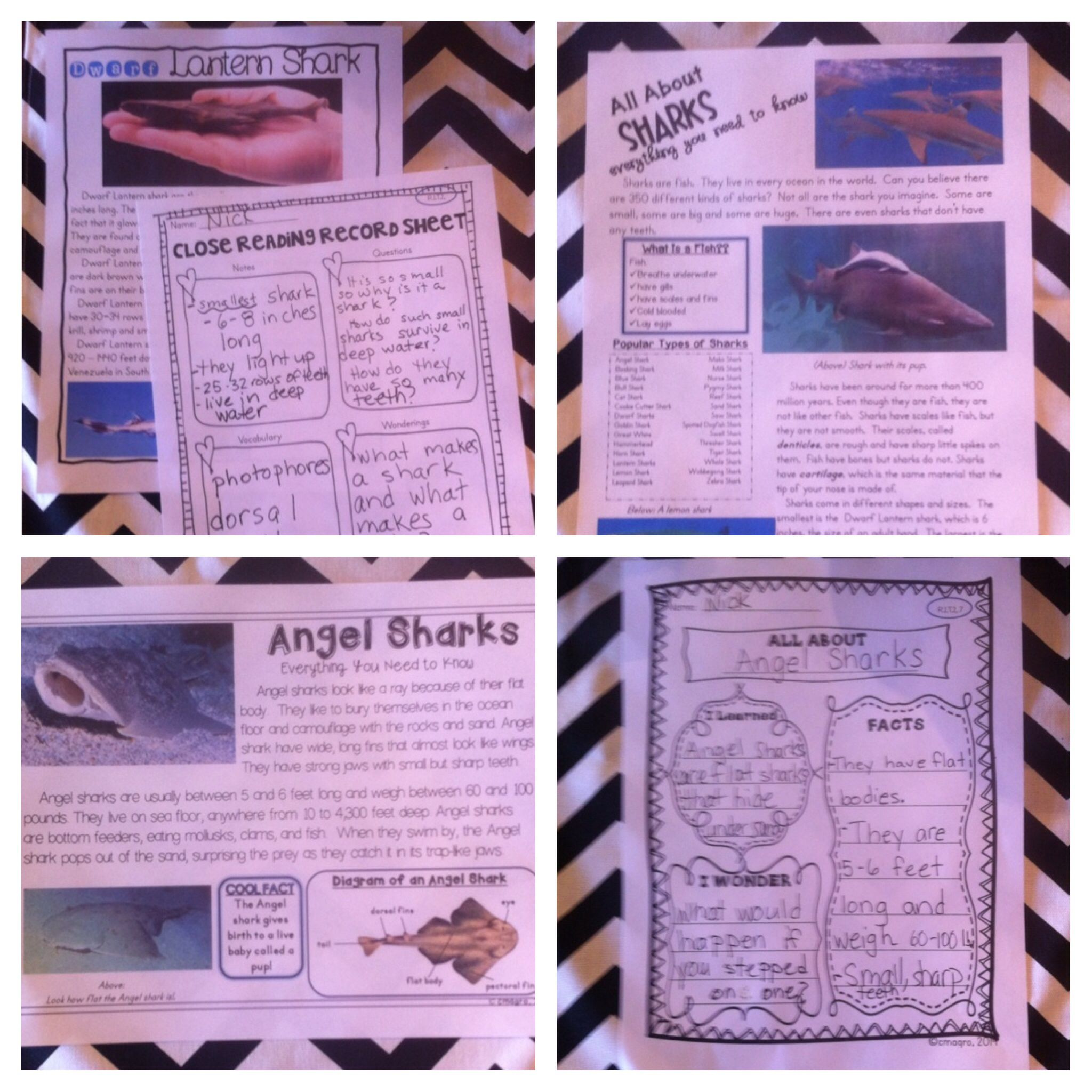 Sharks Nonfiction Reading Passages And Lesson Plans