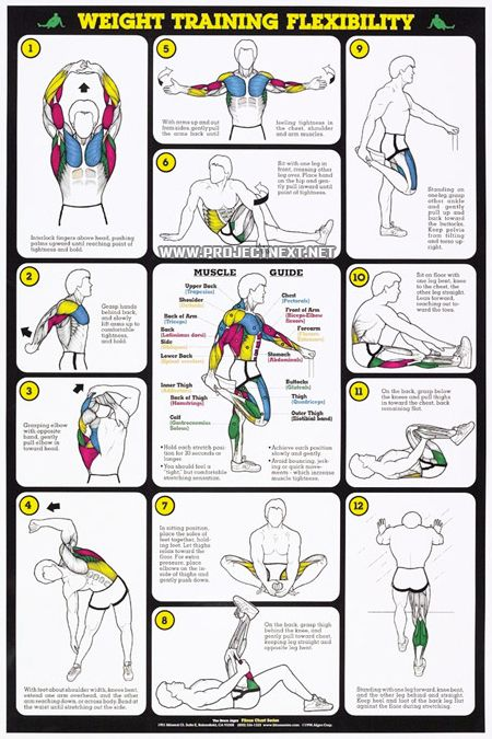 Skyler can   touch his toesybe this will help weight training flexibility chart for men spri wc wtm also best stretching images exercise workouts fitness rh pinterest