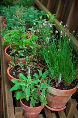 planter les plantes aromatiques le magazine gamm vert maison pinterest herb garden. Black Bedroom Furniture Sets. Home Design Ideas