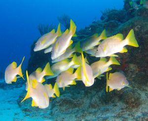 Florida Fishing License Facts Fish Fish Pet Florida