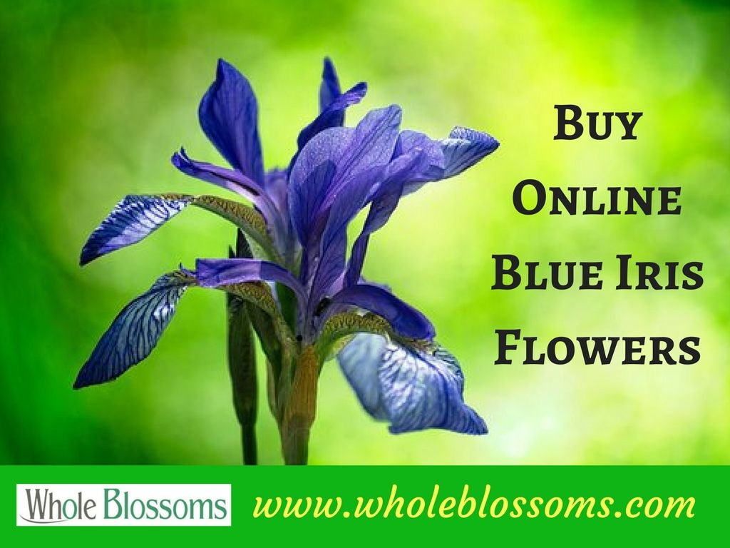 If you want to buy blue iris flowers at the best price then order if you want to buy blue iris flowers at the best price then order them izmirmasajfo