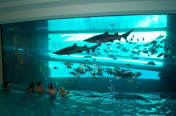 Swimming pool next to a fish tank! So cool! | For my Dream ...