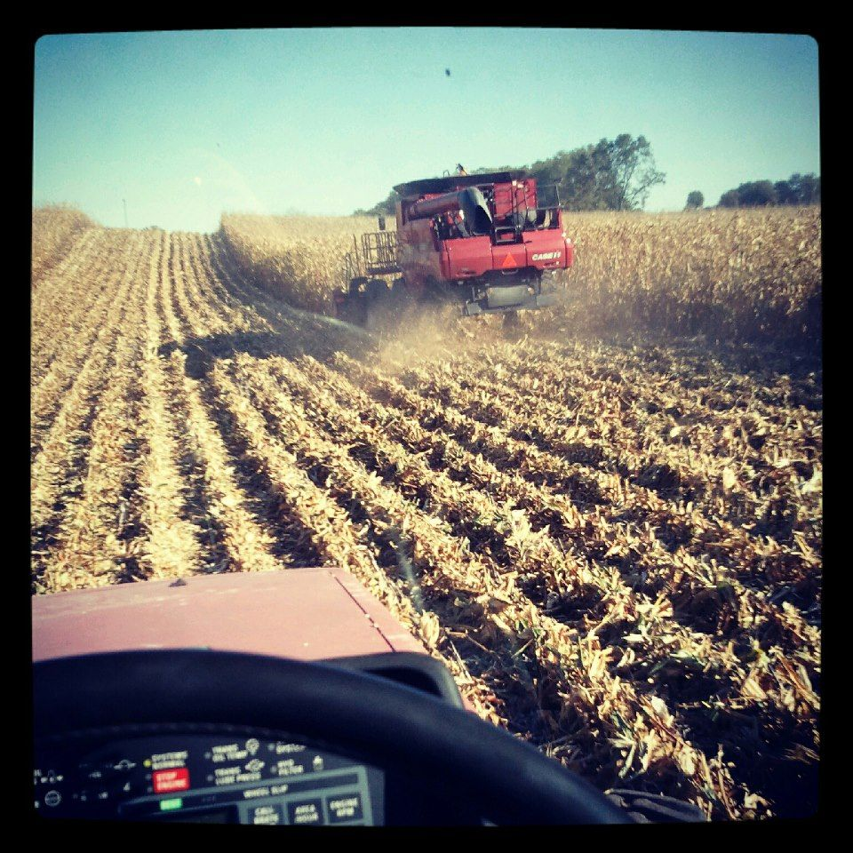 Family Farm Harvest Time  Commercial Agriculture and Intensive