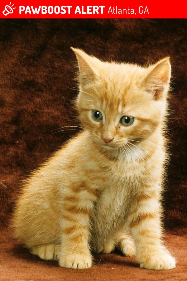 Possibly 7 8 Week Old Orange Tabby Kitten I Am Not The Owner It Ran In