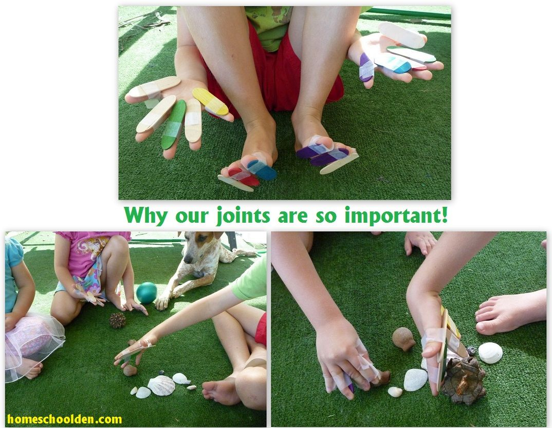 Joints Hands On Activity