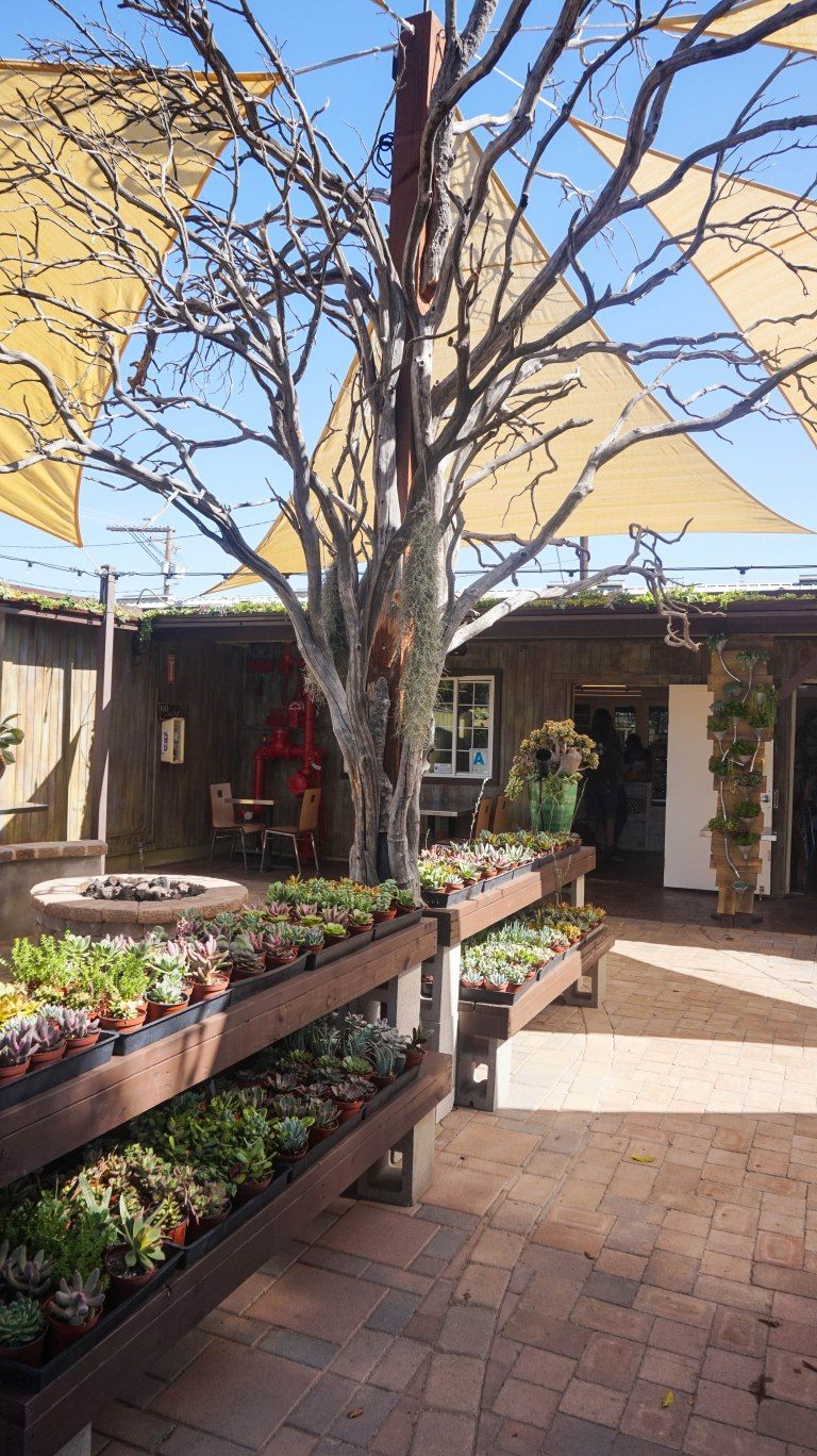 20 exciting things to do in carlsbad california this fall