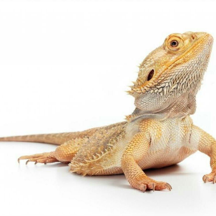 Certain reptiles and amphibians can be terrific pets but