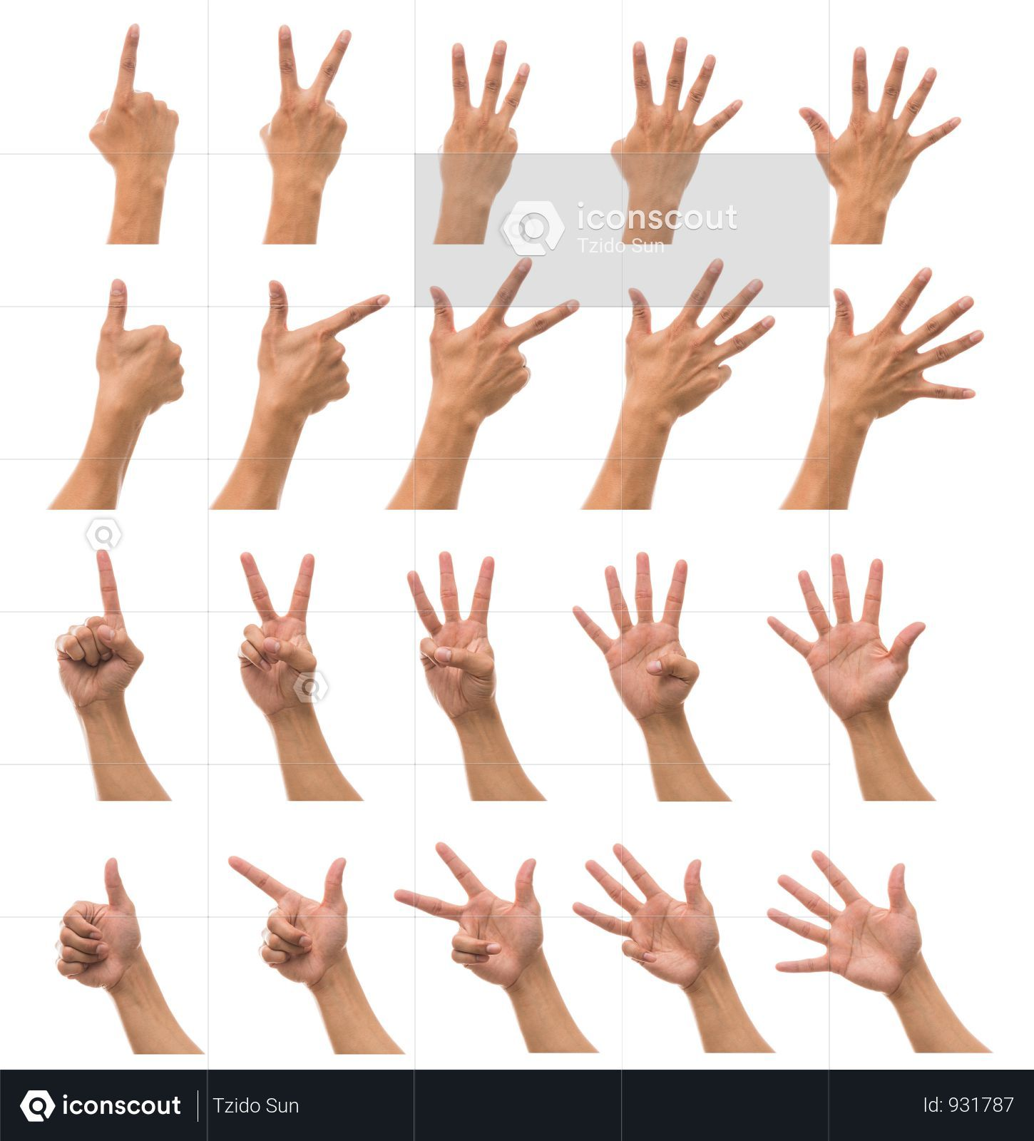 Premium Sum 10 Picture Of Man Hand In Front And Back Side With Show Number Collection Against White Background Photo Download In Png Jpg Format White Background Photo 10 Picture White Background