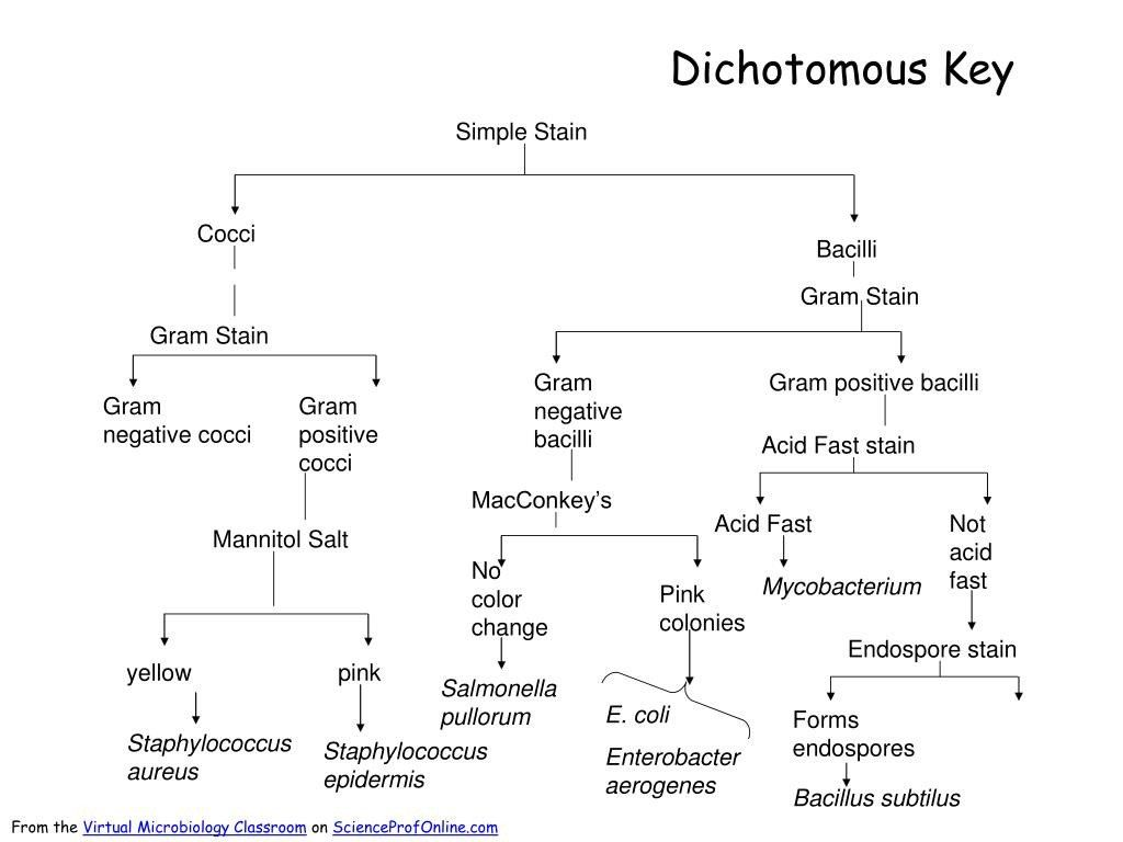 Dichotomous Key Practice Worksheet All Dichotomous Key