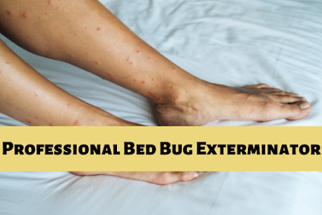 Pin on Bed Bug Control Langley