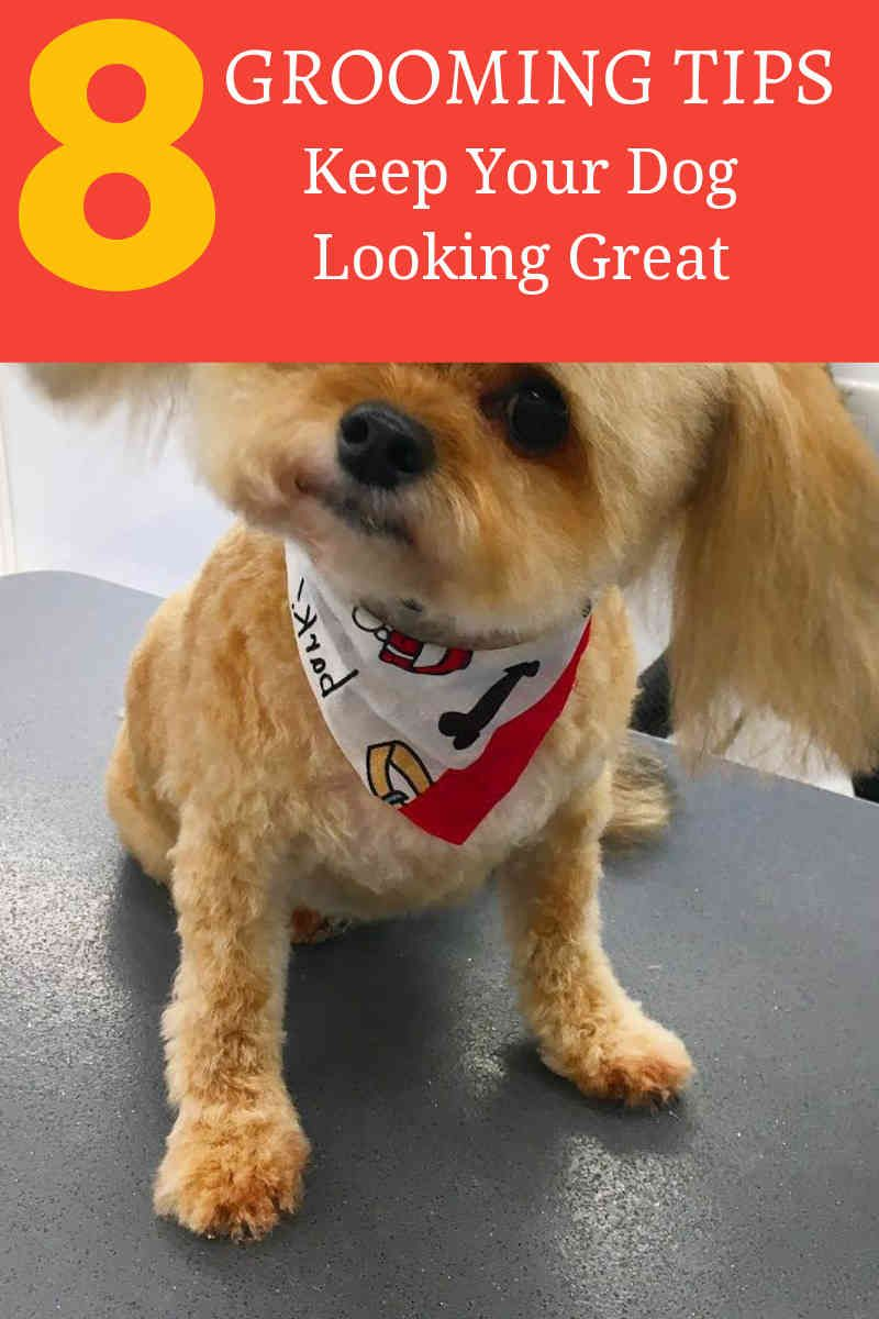 Dog Grooming Is Definitely An Expertise That Is That Is Better