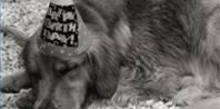 A Dog Birthday Party Idea | eHow.com