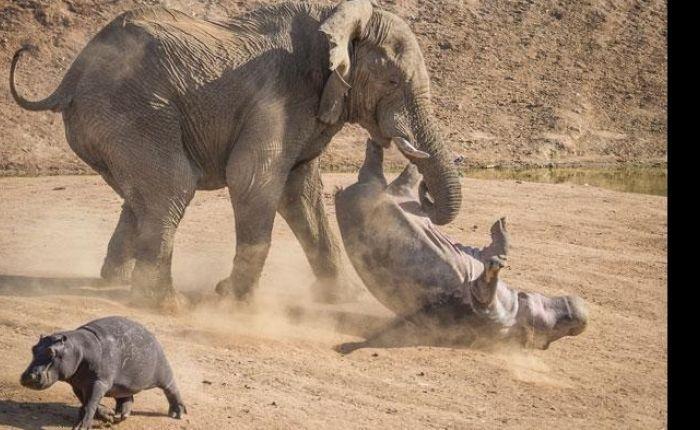 Resultado de imagem para defendendo os elefantes
