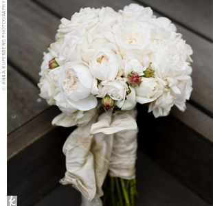 beautiful white garden roses perfect for my bridal bouquet