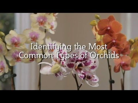 EasyOrchidGrowing.com: Common Types of Orchids Video  Not sure what type of orchid you have? Watch this video to learn about the three most common orchid varieties and how to identify each of them.
