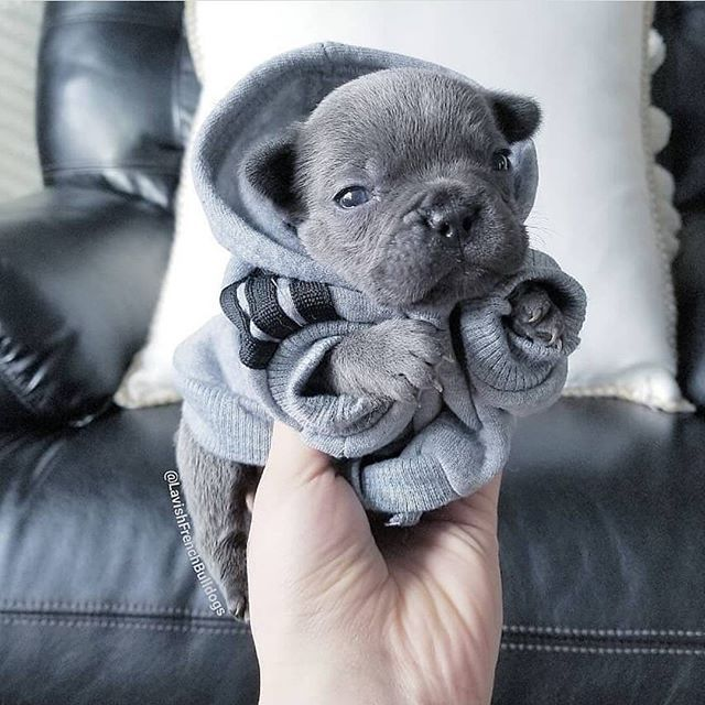 Pin Von Theresa K Auf Suss Hunde Babytiere Bulldogge