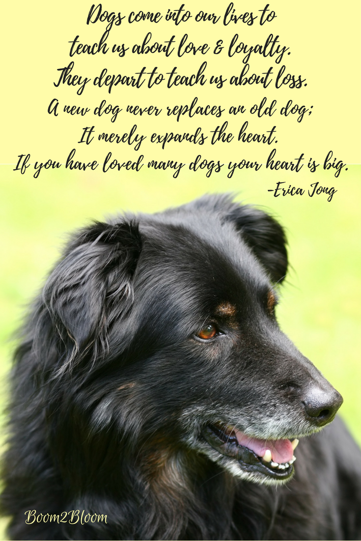 Dog Quotes Reflections On Our Canine Companions Animals Are
