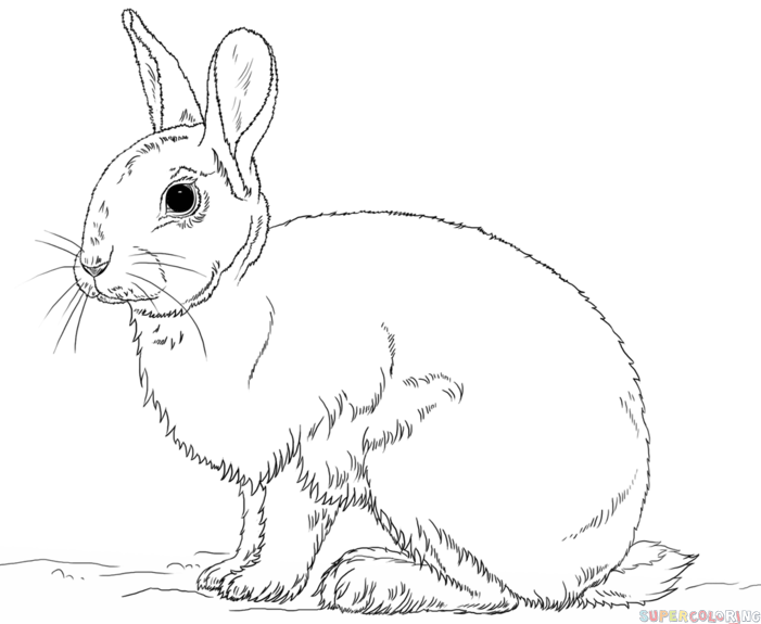 How to draw a rabbit step by step drawing tutorials for for Jack rabbit coloring page