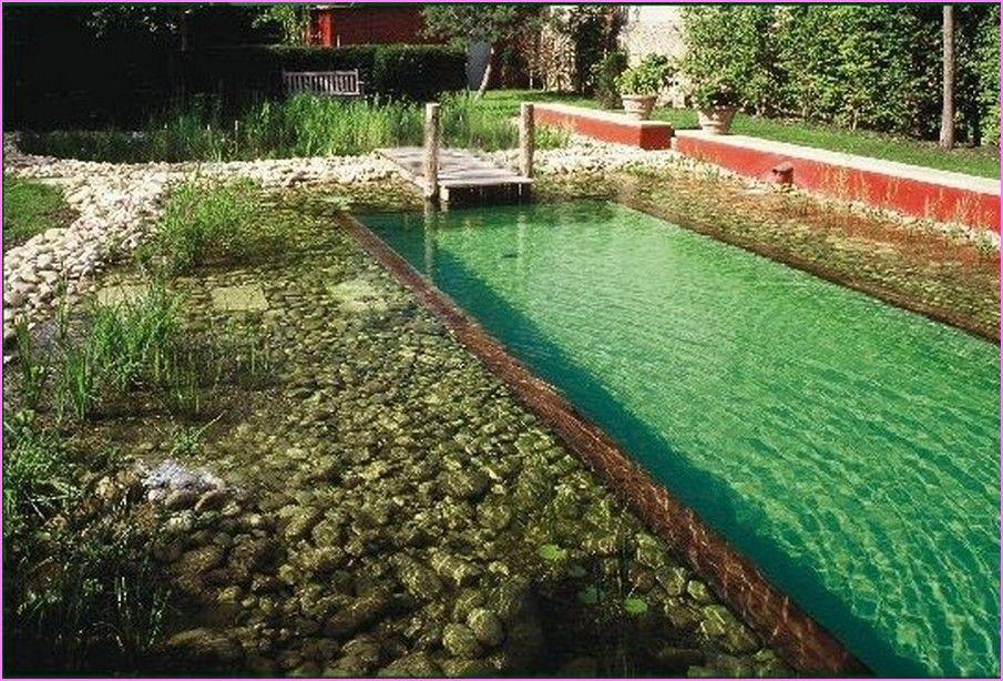 Bestdiynaturalswimmingpooljpg 905614 natural