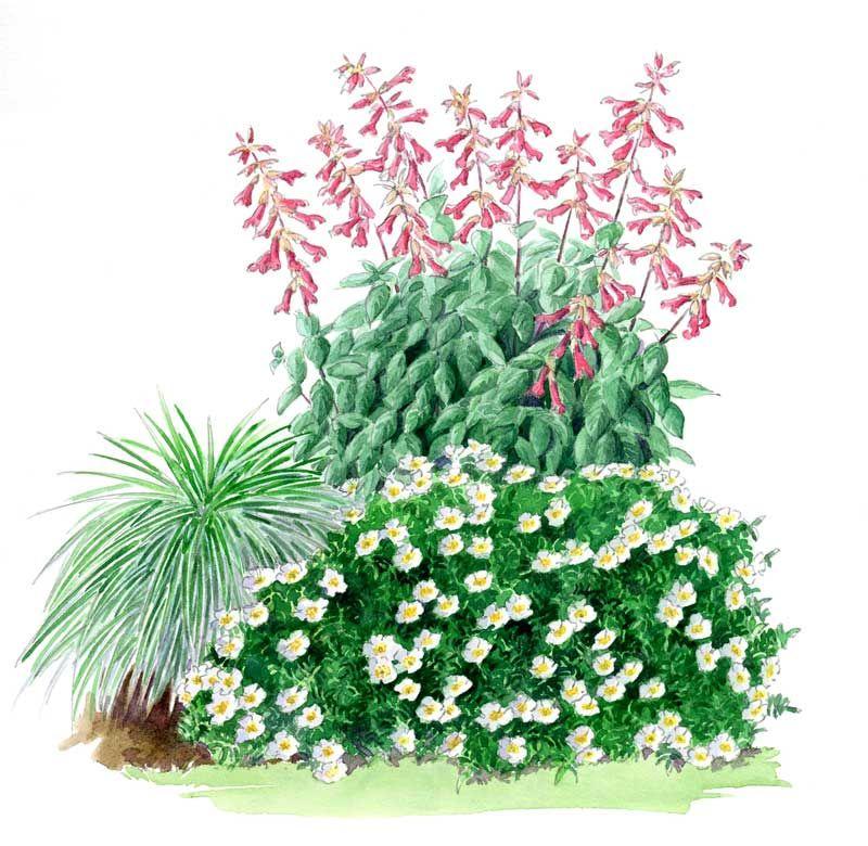 Un jardin qui vous ressemble Globe Planter Rosier, Rose
