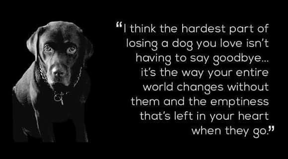 Losing a dog.......
