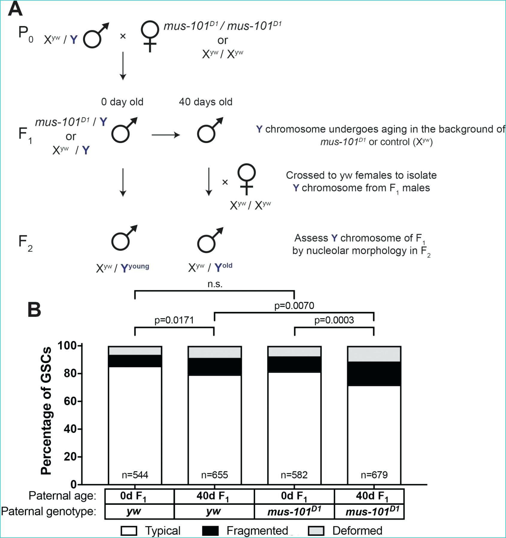 7 Tree Diagram Math Worksheet 2 In