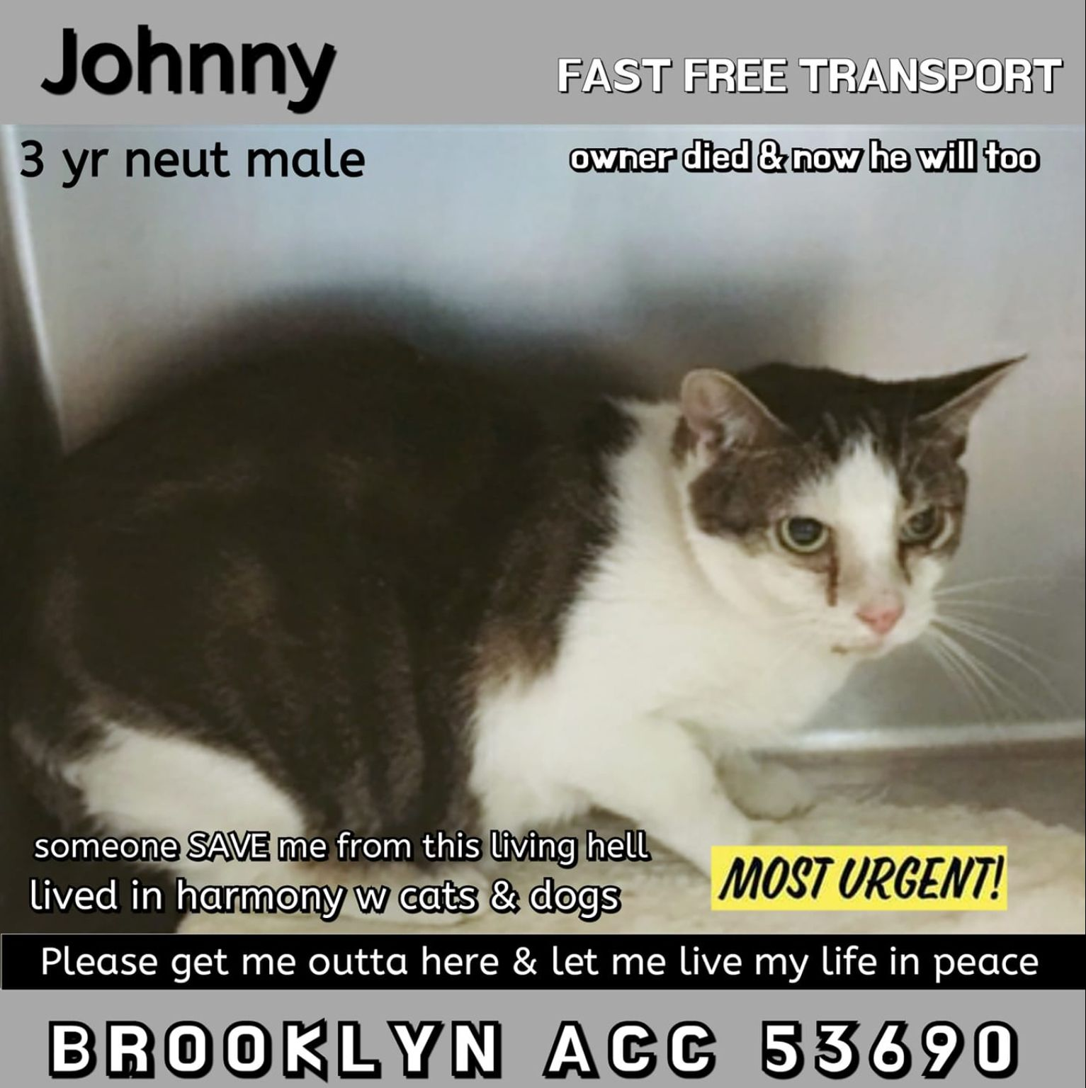 Johnny To Die 02 05 19 Adopt A Cat Urgent Forever Homes Needed Cats Cat Adoption Dog Cat
