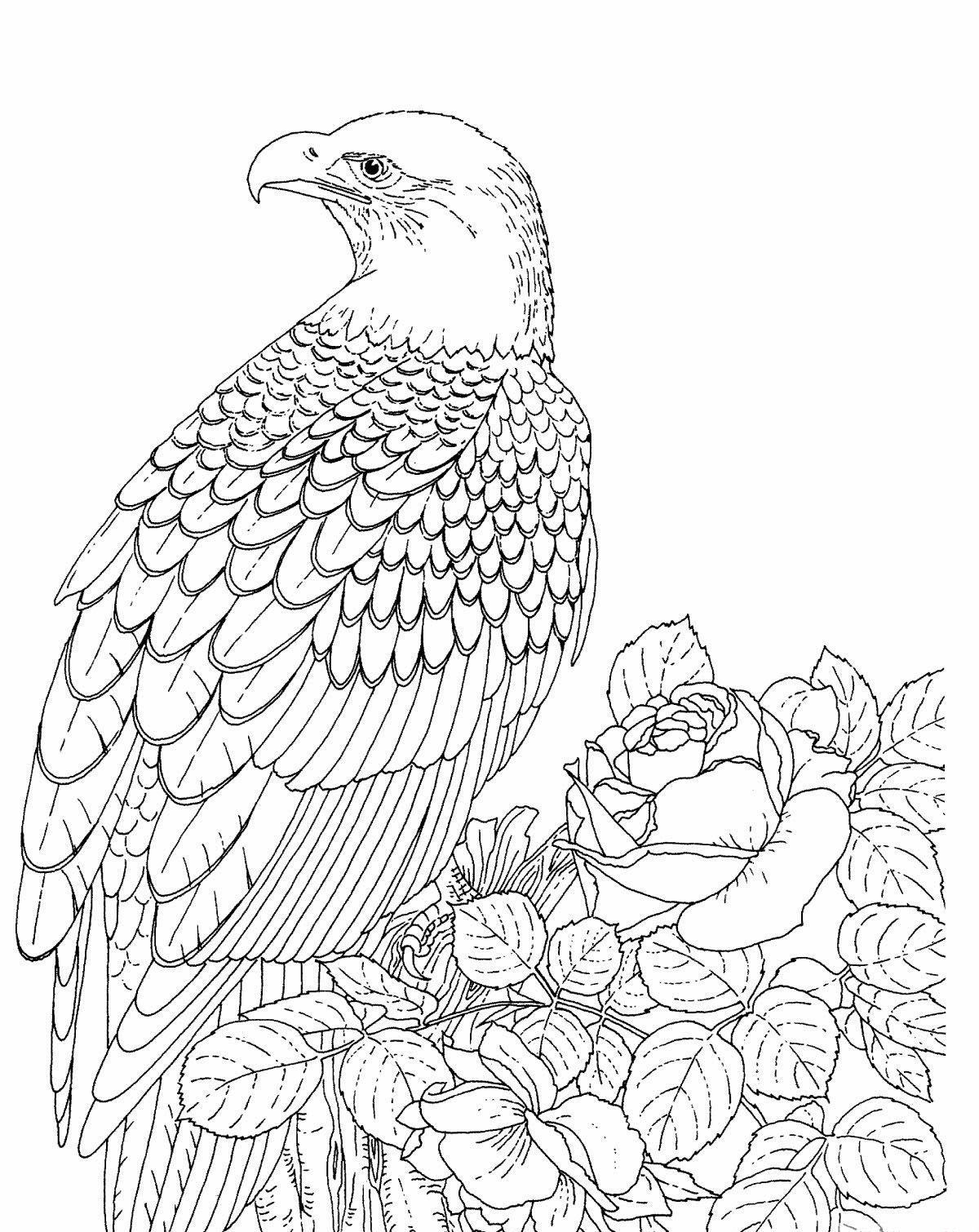 Coloring:Bald Eagle Coloring Pages For Kids Printable Bald Eagle ...