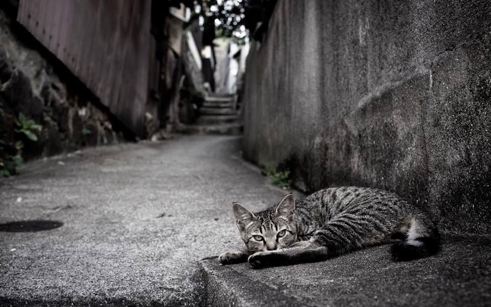 La calle es triste, La calle es dolor, La calle es soledad, La calle es hambre, La calle es frío, La calle es enfermedad, La calle es brutal, La calle MATA...  NO AL ABANDONO....A